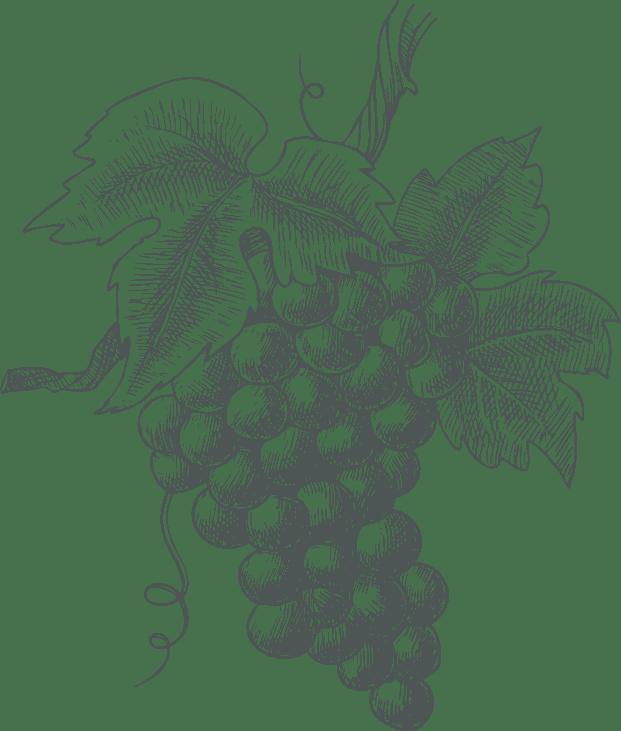 Vineyard-1-a4-2